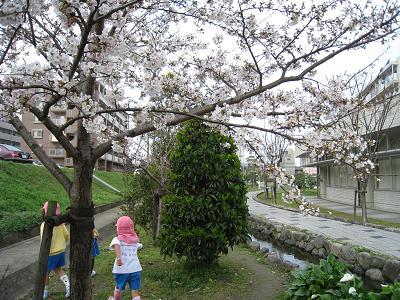 3月23日桜①.JPG